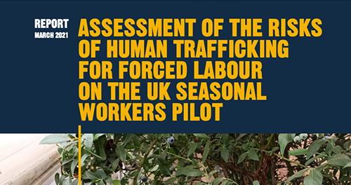 FLEX assesses forced labour risks on UK seasonal Workers Pilot